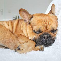 Nap time is my happy hour  #nappyhour #wakemeupwhenitsweekend #orwhenyouhavefood  . . . . . . . . #sleepy #naptime #happyhour #sleepydog…