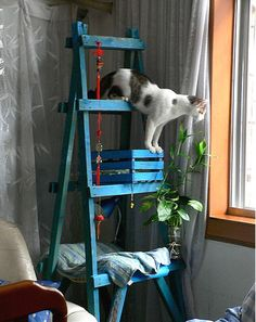 A cat tree that doesn't look horrible. DIY cat tree made out of an old ladder Diy Cat Toys, Cool Cat Toys, Diy Jouet Pour Chat, Old Ladder, Vintage Ladder, Wooden Ladder, Cheap Pets, Cat Towers, Cat Room