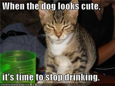 funny pictures-When the dog looks cute, it's time to stop drinking.