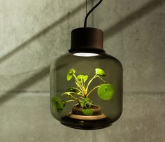 How to Grow Plants in Windowless Spaces with Pendant Lighting