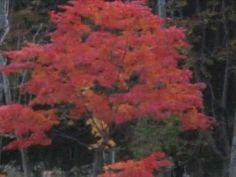 O outono no Japão