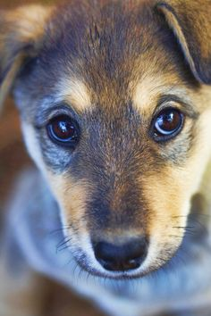 """I think that this is the definition of """"puppy-dog eyes"""""""