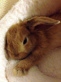 Bunny in bedje ...xxxxxx slaap Zoetjes Mijn knuffeltje xxxxxxxx