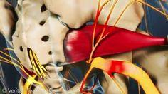 Crónicas de una Kinesiología Moderna: Algunos cuestionamientos sobre el Síndrome del Piriforme...