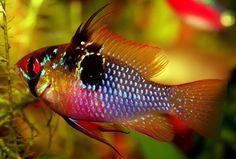Natural Ways to Adjust #Aquarium pH