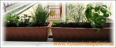 Při pěstování bylinek na okně je máme stále k dispozici.Neměli bychom ale všechny pěstovat v jednom truhlíku, některé chtějí slunce, jiné bohatou zálivku... Pesto, Plants, Gardening, Garten, Planters, Lawn And Garden, Garden, Plant, Planting