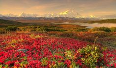 Alaskan Mountain Beautiful Nature Denali Clouds Tundra Autumn Park Sky Landscape National Colors Sunsets Flowers Flower Wallpaper Backgrounds Hd