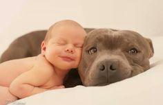 Baby + Pitbull