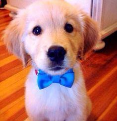 Adorable puppy!!