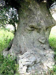 the grumpy old gum tree.I'm the grumpy old gum tree.