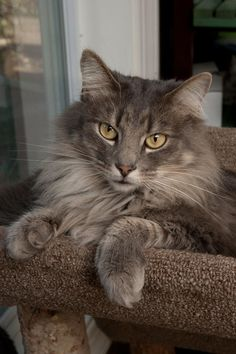 Dahlia - 25 Names for Southern Cats - Southernliving. null
