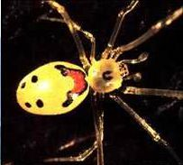 Are you afraid of spiders? Learn more about our 8-legged friends here: http://www.uhaul.com/supergraphics/states/hawaii/spider/main.html
