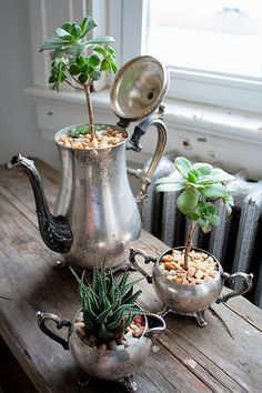 Succulents in antique silver.