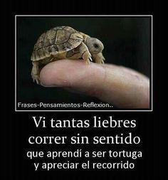 Seamos tortugas!