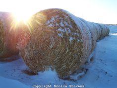 Snowed Covered Bales