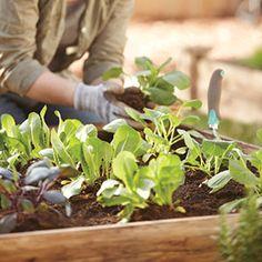 Edibles to Plant in Autumn | Garden Club