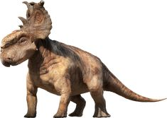 This high quality free PNG image without any background is about dinosaur, animal dinosaur, dinosaurs and big dinosaur. Short Faced Bear, American Lion, Walking With Dinosaurs, Dinosaur Pictures, Dire Wolf, Megalodon, Dinosaur Art, Sword And Sorcery