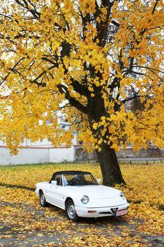 '88 Alfa Romeo Spider 115 S3 Zender / October in Lithuania/ www.best2go.lt