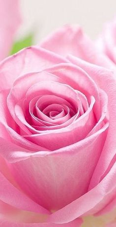 pink rose ✿⊱╮  If you care about ending poverty and reducing homelessness go to http://www.fuzeus.com
