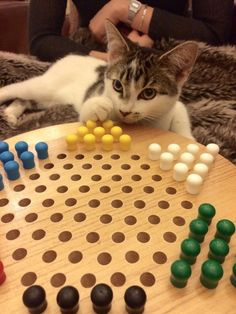 This cat who is very intensely planning his next move.