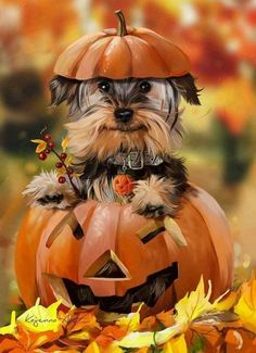 By taking a few precautions, you can ensure a happy Halloween for everyone in th. - By taking a few precautions, you can ensure a happy Halloween for everyone in the family, pets incl - Good Morning Image Quotes, Good Morning World, Morning Images, Morning Pics, Sunday Morning, Morning Quotes, Morning Coffee, Chat Halloween, Pet Halloween Costumes