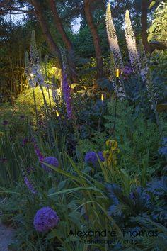 Agapanthus Garden by night. Agapanthus Garden, Garden Art, Garden Ideas, Land Scape, Night, Plants, Group, Facebook, Design
