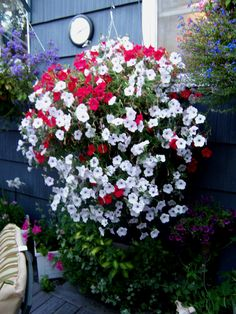Red and White Petunia Basket Hanging Baskets, Hanging Plants, Potted Plants, Hanging Gardens, Flower Planters, Garden Planters, Love Flowers, Beautiful Flowers, Graduation Flowers