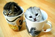 Cats in cups.