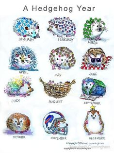 An entire year of adorable hedgehogs in watercolor and ink! Buy this artwork on apparel phone cases home decor and more. - Tap the link to shop on our official online store! You can also join our affiliate and/or rewards programs for FREE! Pygmy Hedgehog, Hedgehog Pet, Cute Hedgehog, Hedgehog Cage, Cute Baby Animals, Animals And Pets, Funny Animals, Hedgehog Drawing, Hedgehog Tattoo