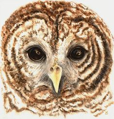 Guardian Barred Owl An Original Watercolour Painting of