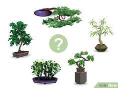 Image titled Start a Bonsai Tree Step 01