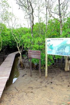 Step into the Mangrove swamps, Mtunzini, South Africa South Africa, Landscape, Country, Outdoor Decor, Beautiful, Africa, Scenery, Rural Area, Country Music
