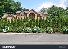 Rhododendron Flowers Spruce Pine Trees Landscaped Stock Photo ...