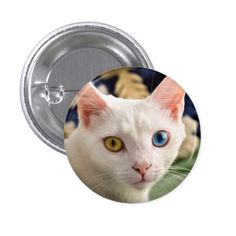 Cat Button https://www.zazzle.com/cat_button-145165021109423518?rf=238498825812378580