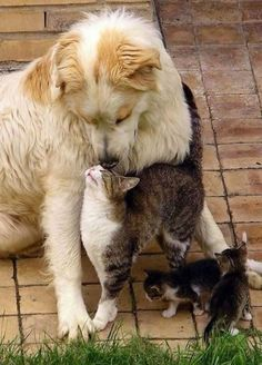 köpek kedi sevgisi - #dog #cat #fireands