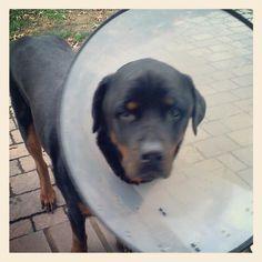 Cone of shame! :-(