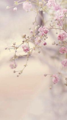 Blumen Bilder With small pink flowers our hearts open. With small pink flowers our hearts open. Flower Backgrounds, Flower Wallpaper, Wallpaper Backgrounds, Iphone Wallpaper, Tree Wallpaper, Small Pink Flowers, Pretty Flowers, Floral Flowers, Pink Roses