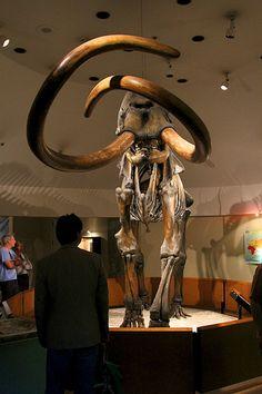 La Brea Tar Pits, L.A. Natural History Museum, Los Angeles, CA