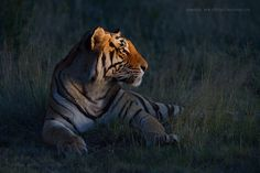 King Of The Night by Marsel van Oosten on 500px.com