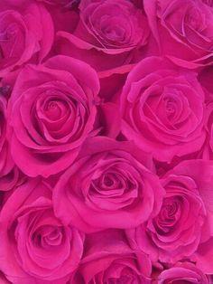 Pretty magenta roses | Bonitas rosas rosadas #pink ✿⊱⊱✿⊱╮