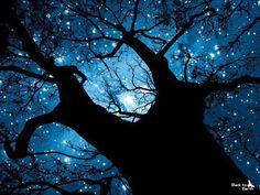 Árvore de Estrelas.