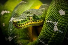 """500px / Photo """"Snake"""" by Justin Lo"""