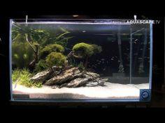 Aquascaping - Aquarium ideas from ZooBotanica 2013, pt.6