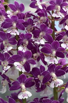 A mystical shade of purple flowers on a beautiful flower can completely change the look and appeal of your home, garden, bouquet, wallpaper and even wedding decoration.  tall dark purple flowers pictures names