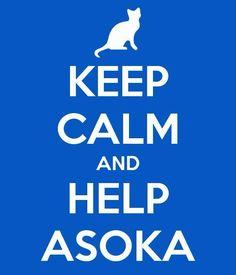 Como voluntario, adoptando, acogiendo, apadrinando, haciéndote socio, colaborando en el rastro, difundiendo. Help AsoKa!!!!