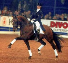 Krack C - KWPN & Oldenburg Anky van Grunsven's esteemed dressage partner, is one of the most respected sires of dressage excellence in Europe. Krack C's sire, Flemmingh, is the sire of many other outstanding dressage stars, including Edward Gal`s top horse Lingh. Flemmingh breeds beautiful, big, long-lined horses with three super gaits.