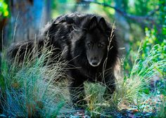 View Kirsten Bowers' striking galleries of fine art animal photography, also including nature and urban images, capturing the spirit of her subjects. Shadow Photography, Animal Photography, Wolf, Belgian Shepherd, Amazing Pics, Dog Breeds, Dog Cat, Flora, Angels