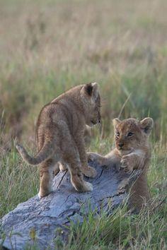 Give me a hug! by Lisa Crawford on 500px