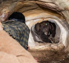 Photo by Corey Arnold @arni_coraldo  Wes @grizkid is seen here crawling into a unusually deep and narrow 70 foot den in order to sedate and re-collar a 320lb male black bear around Bryce Canyon National Park. It was one of the most claustrophobic and scary situations of my life. Wes disappeared into the den of this hibernating bear armed with only a short aluminum pole attached to a tranquilizer dart. The tunnel was only as big as the bear with no escape except a very quick 50 foot backwards…