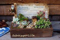 寄せ植えと再会する - Sabotage*Life